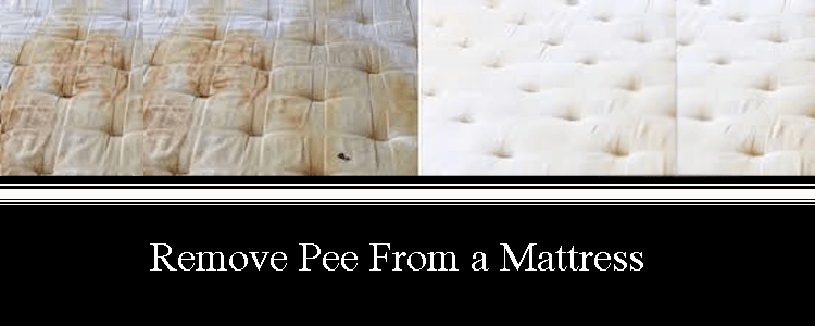 Remove Pee from a Mattress